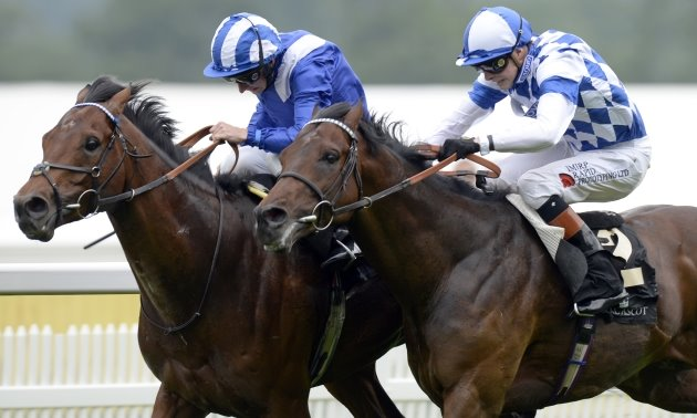 What is Timeform Jury Daily?
