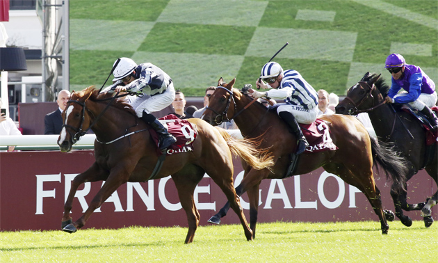 Betting odds 1000 guineas runners spread sports betting explained