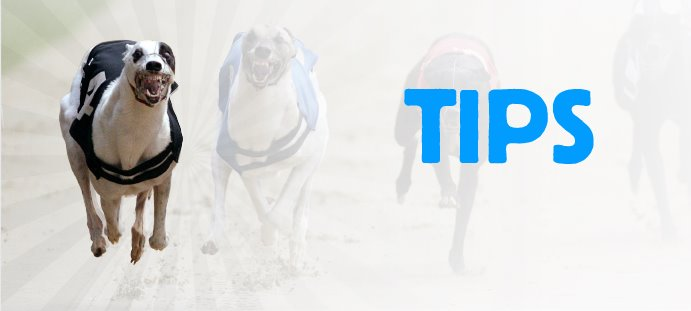 hove dogs betting tips