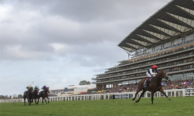 ascot champions day betting tips