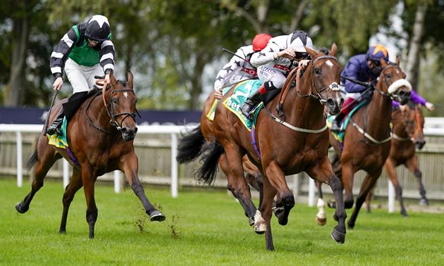 Unbeaten Dandalla pointing towards Prix Morny