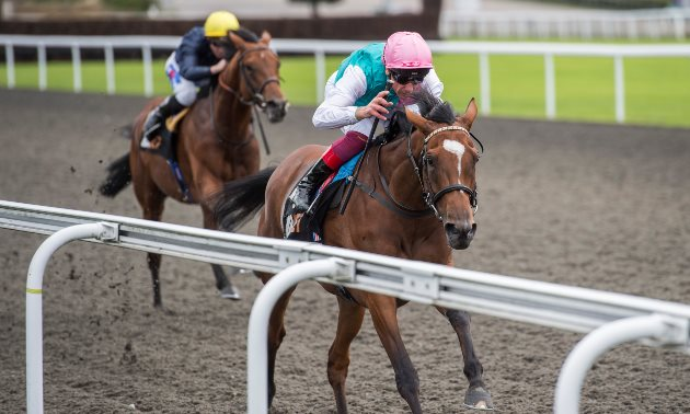 King george stakes betting top bet sports betting limited