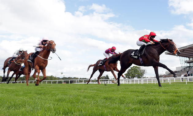 Solario stakes betting line td sportsbook betting