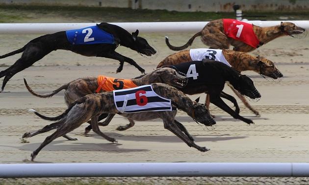 Greyhound racing betting terminology bra live betting sidorenko