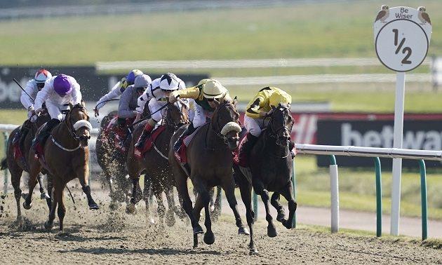 Horse betting analyst review report newbridge betting guide 111