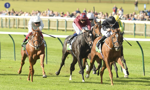 timeform 1000 guineas betting