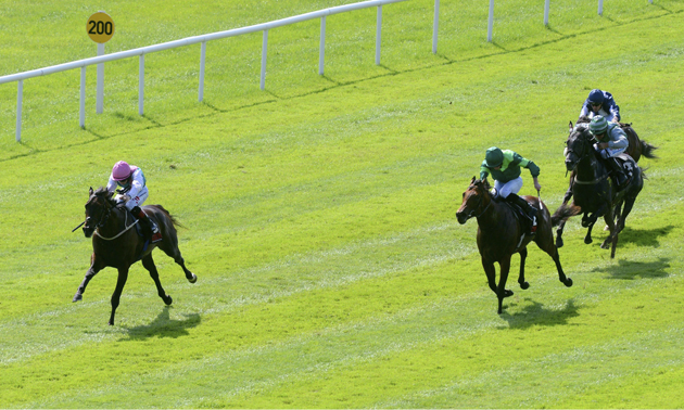 Irish 2000 guineas betting 2021 spike cards points betting