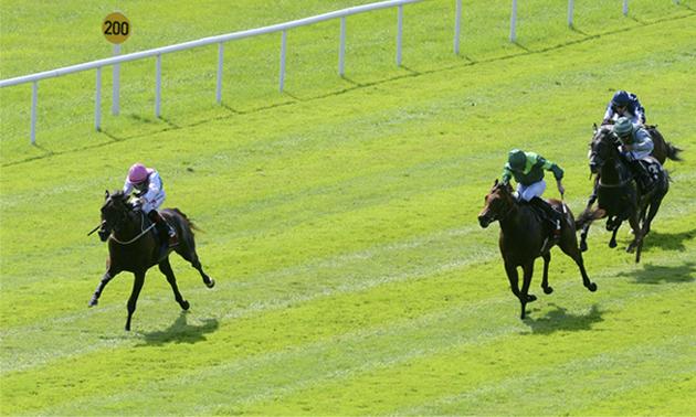 Irish 2000 guineas betting tips us regulated binary options amex