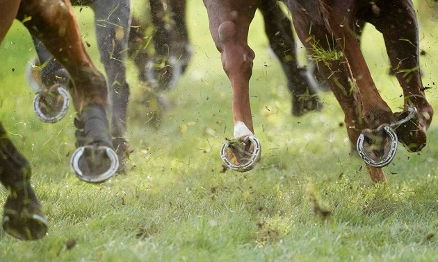 South African Racing Tips: Thursday 13 August